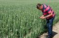 Comment les agriculteurs convertis au bio se sont réapproprié leur métier