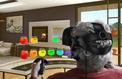 Un casque de réalité virtuelle rêve les thérapies de demain