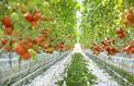 Avec les serres chauffées, le bio fait un pas vers la production de masse