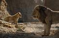 Box-office :le règne absolu du Roi Lion en France et aux États-Unis