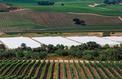 Les viticulteurs californiens en guerre contre les producteurs de cannabis