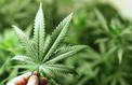 Le Luxembourg veut légaliser le cannabis, une première en Europe