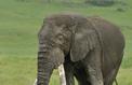 Comment rendre plus efficace la protection de la faune sauvage?
