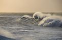 Les «pourquoi» de la plage