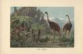 En Nouvelle-Zélande, l'homme a décimé les oiseaux en 700 ans