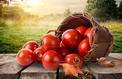 Des tomates au jardin jusqu'en novembre, c'est possible!