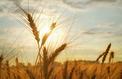 Eviter les insecticides, le pari de la start-up française M2i Life Sciences
