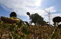 Comment l'évolution climatique change l'agriculture française