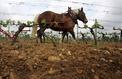 Haut-Rhin: accusé de produire trop de crottin, le cheval Sésame devant la justice
