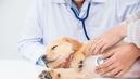 Pour annuler la vente d'un chien, il faut prouver que l'animal était malade lors de la remise