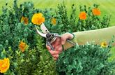 Jardiner sans s'égratigner