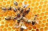 Les remèdes secrets des abeilles