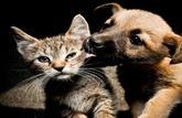 Laisser un animal enfermé dans une voiture au soleil est puni de 750 € d'amende
