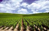 S'offrir un rang de vigne