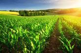 Reprendre au fermier une terre reçue en héritage