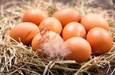 Les œufs retrouvent des couleurs