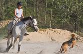 Les propriétaires de chiens à l'origine d'un accident sont responsables, même en l'absence de contact avec la victime