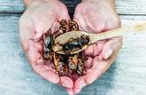 Des insectes dans notre assiette