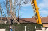 On peut réclamer l'élagage de l'arbre de son voisin uniquement