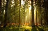 + 3,5 % sur le prix de l'hectare de forêt en 2018