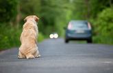 Ce qu'il faut faire lorsqu'on trouve un chien dans un lieu public