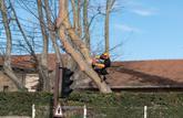 Un copropriétaire fait obstacle à la coupe d'un arbre dangereux
