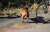 Mon chien a provoqué l'accident d'un cycliste