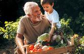 L'entretien du jardin et du potager