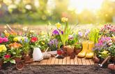 Les dangers cachés du jardinage