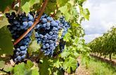 L'hectare de vignes se négocie à prix d'or