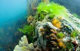La mer: une médecine douce naturelle
