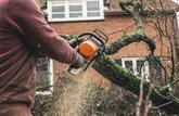 Je fais arracher l'arbre du voisin
