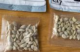 Le ministère de l'Agriculture lance une alerte sur des graines envoyées de Chine