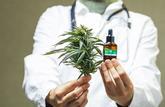 Le cannabis thérapeutique sera prescrit sous 5 formes
