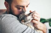 Le défaut d'identification des chats est désormais sanctionné