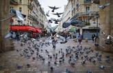 Faites la chasse aux pigeons !
