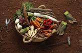 Le panier de saison du mois de février 2021 : les fruits et légumes à consommer
