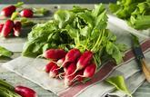 Le radis rose à croquer