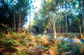 Pour investir dans les forêts ou les vignes, le site Le-prix-des-terres va vous aider dans votre prise de décision