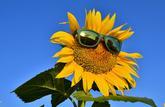 Fiche pratique : choisir des verres solaires