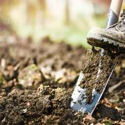 Jardin: opération «nettoyage d'automne»