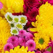 Toussaint: les chrysanthèmes pour honorer nos défunts