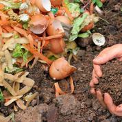 Compost: quelle quantité apporter dans un jardin?