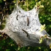 Invasion de chenilles, pucerons, larves... Comment protéger son jardin?