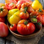 Tomates savoureuses: comment réussir leur culture
