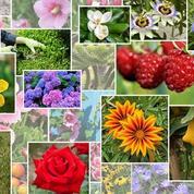 Les plantes de A à Z: bien les connaître pour mieux les cultiver
