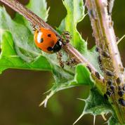 «Jardinez-vous!»: comment protéger les plantes sans pesticides?