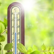 Jardin: comment aider les plantes à supporter la sécheresse