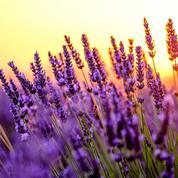 Plantes du Midi: invitez le soleil dans votre jardin