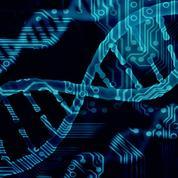 Des embryons humains génétiquement corrigés